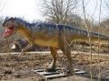 Allosaurus2-WinfriedHoor-300dpi.jpg