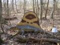 Dimetrodon-WinfriedHoor-300dpi.jpg