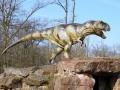 T-Rex-Jungtier-WinfriedHoor-300dpi.jpg