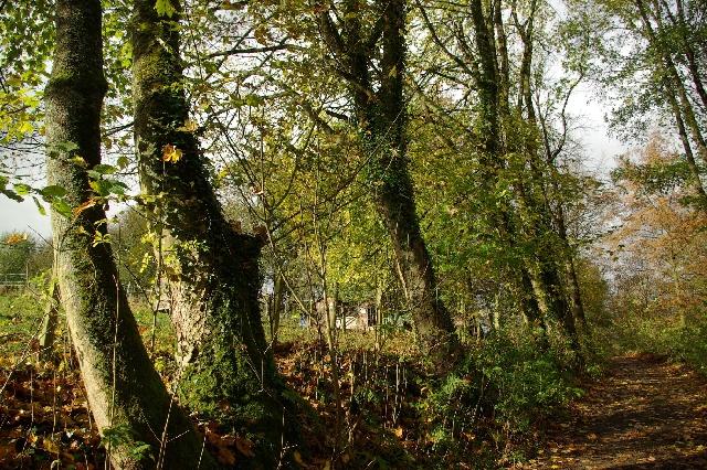 Ein bunter Herbsttag im Kutscherhaus am Weiher im Westerwald.
