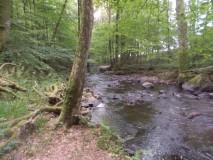 Naturpark Hunsrück Hochwald