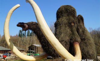 Mammut Foto: Winfried Hoor