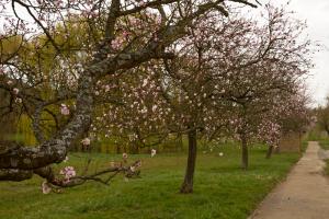 Wandern an der südlichen Weinstraße zur Mandelblüte ist ein Erlebnis der Sinne. Foto: Daniela Trauthwein
