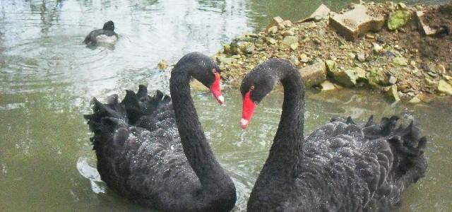 Vogelpark Trierweiler