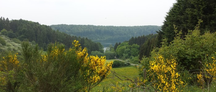 Das Pulvermaar und seine Vegetation in der Vulkaneifel