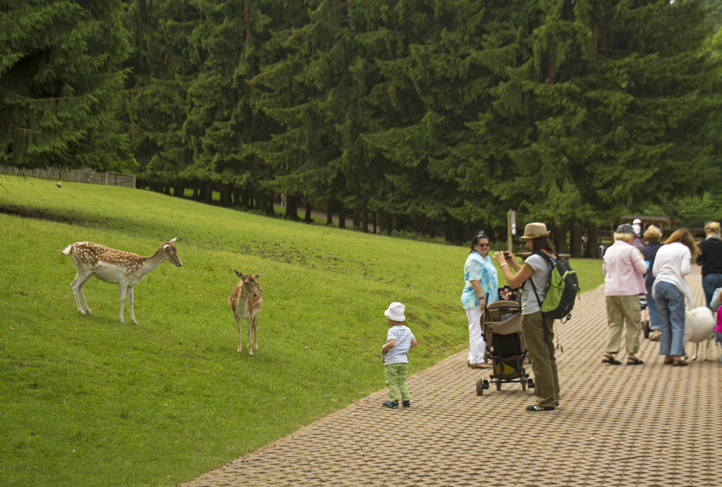 Besucher im Wild- und Wanderpark Silz