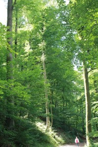 Wunderschöne Wanderwege laden zu einem ausgedehnten Spaziergang rund um das Pulvermaar bei Gillenfeld ein.